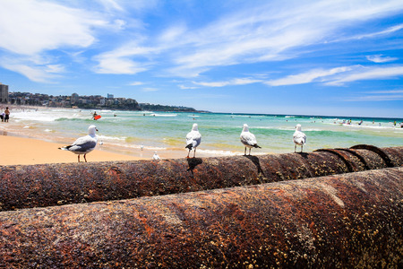 manly: View of Manly Beach Sydney Stock Photo