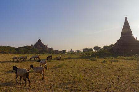 enchanting: Bagan Burma