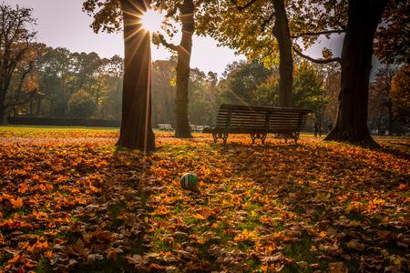 pit fall: Autumn colours in Belgium