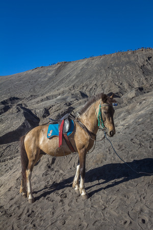 Donkey in Mount Bromo Indonesia Stock Photo