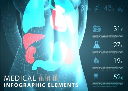 organos internos: m?dicas elementos infogr?ficos Vectores