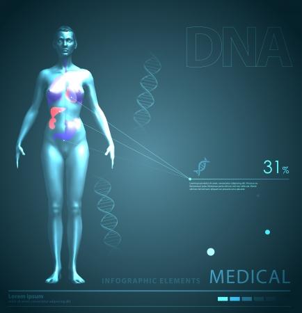 organos internos: elementos m�dicos infograf�a