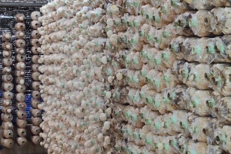 cylindical mushroom in Plant cultivation photo