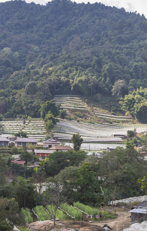 Agriculture in the highland valley in Chiang Mai province