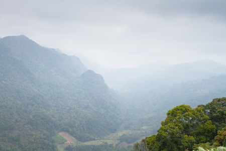 The rainforest was shrouded in mist at winter season of Thailand Archivio Fotografico