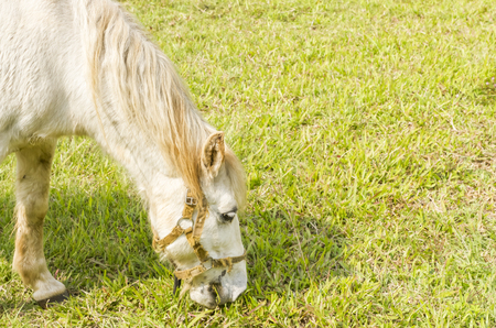 Horses are eating grass in the noontime Stock fotó