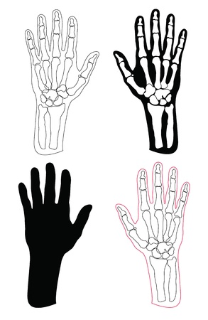 Collection of human hands and bones Vector