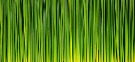 long grass background