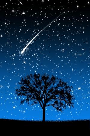 cielo estrellado: Árbol bajo las Estrellas con estrellas fugaces en el fondo de la noche