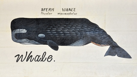 Whale painted on the white wood background