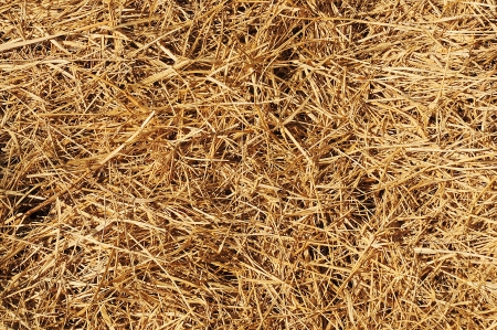 Texture of straw on the floor