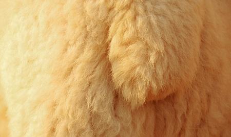 furry stuff: Close up of sheep wool Stock Photo