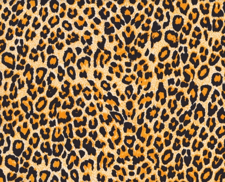 Texture of leopard skin background photo