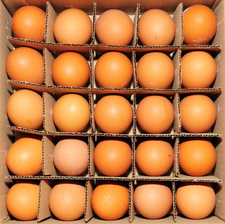 Eggs in a protective cardboard container photo