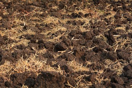 black soil: Black soil and rice straw background