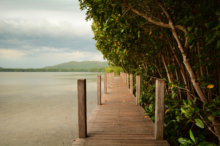 marshes: A boardwalk through the marshes beside mangrove forest Stock Photo