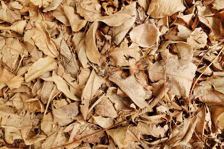 Close up of dry leaves background