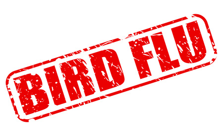 avian flu: BIRD FLU red stamp text on white