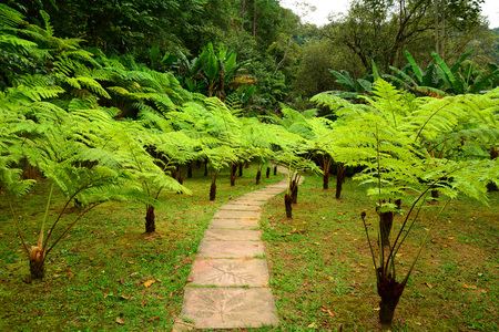 helechos: Forest hiking trail covered with ferns background