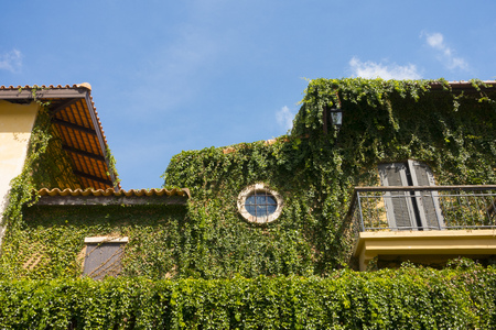 Green plants covering building on the blue sky background
