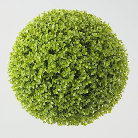 Green plant sphere on white background