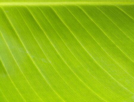Close up of green leaf background 版權商用圖片