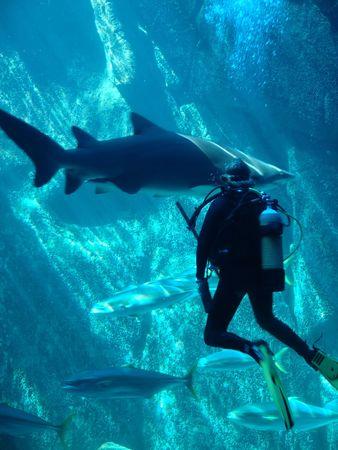 scuba diver and shark,
