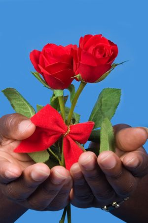 Two valentine rose, open hands photo