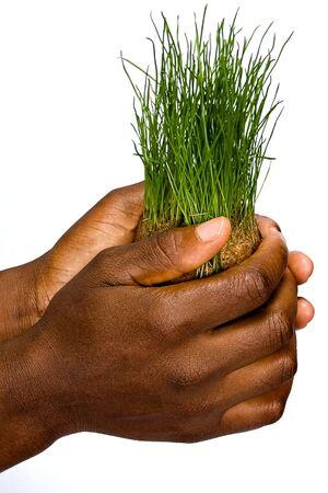 緑の草、小麦の束を保持しているアフリカ系アメリカ人の女性 写真素材