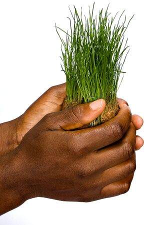 African American woman holding a bunch of green grass, wheat,