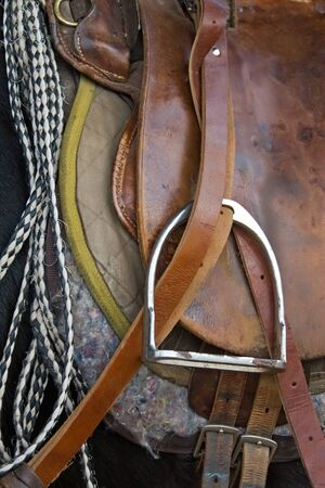 herbivore natural: Pony saddle, horse waiting for the rider at the ranch