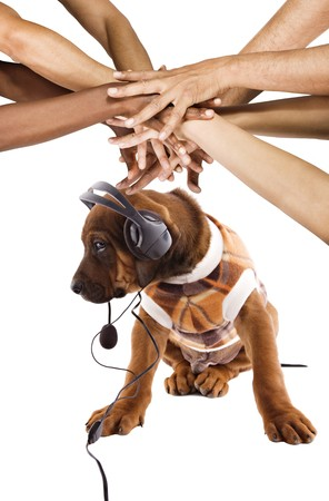 Conceptual Rhodesian ridgeback puppy , listening music, group of multiracial  hands in top photo