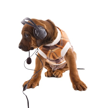 Rhodesian ridgeback puppy with a blanket coat suit, listening some music . photo