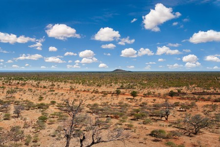 chose: the Southern African semiarid bush, South Africa, Botswana, horizon in the middle chose sky or land Stock Photo