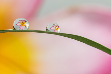 refracting photography, the big flowers refracting in the water drops Фото со стока
