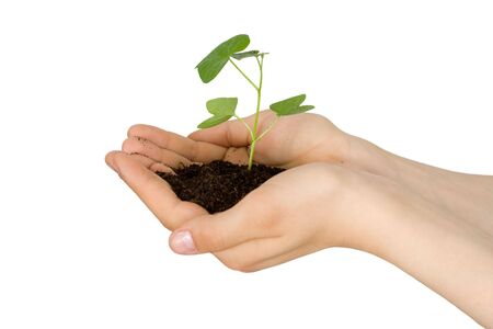 Plant in a hand of the child on an isolated background photo