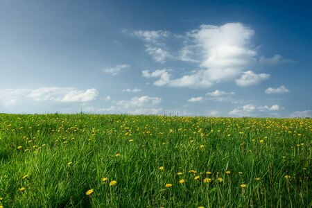 Field with dandelions, the blue sky with clouds Stock Photo - 1470113