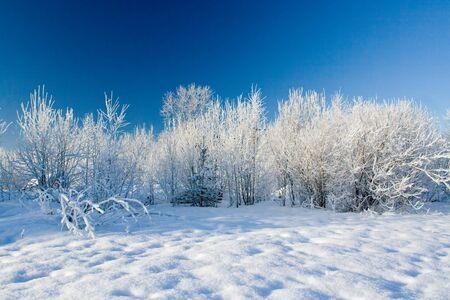 나무에 늦었다와 겨울 풍경