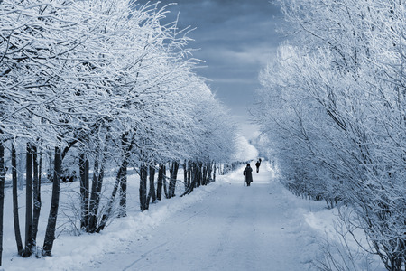 which: Winter path in park on which people walk Stock Photo