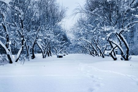 Winter avenue after a strong snowfall Stock Photo - 2154984