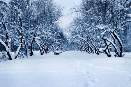 boles: Winter avenue after a strong snowfall