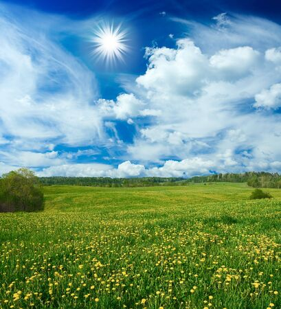 Beautiful field with dandelions and the cloudy sky Stock Photo - 3031246