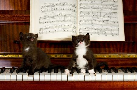 Small kittens sit on keys of the piano