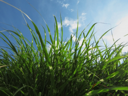 blau: Grass  in front of the sky