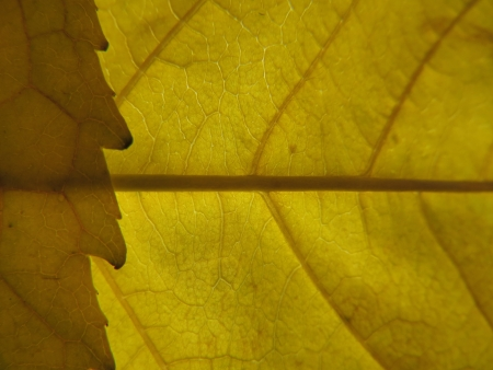 Yellow leaf texture  Stock Photo