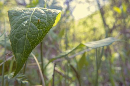 leafs: Leafs