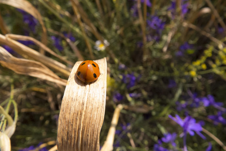 Ladybug in a meadow Stock Photo