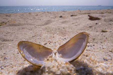 Black sea shells