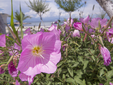 Flowers on the beach