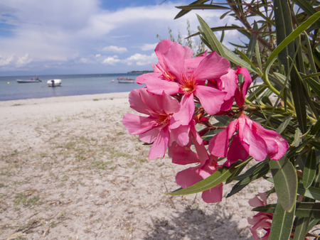 clowds: Flowers on the beach